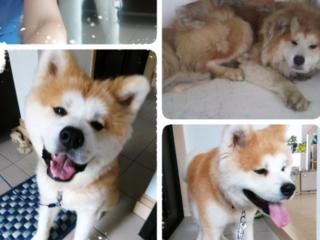 保護犬が住む犬舎の補修と片目を失った猫ちゃんの治療を続けたい