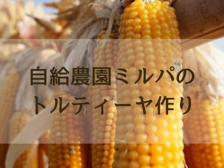 安心で安全なトウモロコシを使ってトルティーヤを作りたい!