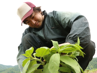 天然のインスリンと呼ばれる菊芋を、北海道仁木町で栽培したい!