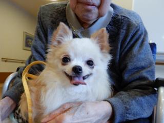 遺棄された老犬老猫を救う「保護っ子カフェMOKOん家」の開設