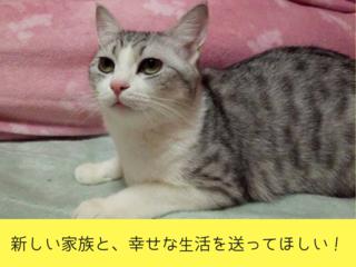 一匹でも多く新しい家族へ!福山唯一の保護猫カフェを作りたい!