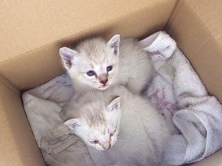 奈良で保護猫カフェをオープンし、猫の殺処分数を減らしたい!
