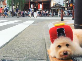 故郷の鹿児島で地方創生事業!愛犬まんぺいと行く、全国調査の旅