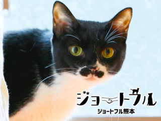 猛暑でも安心のトレーラーハウスで熊本の保護犬猫たちの譲渡会を