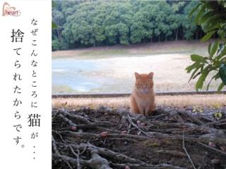 愛知県東三河最大の「猫捨て場」にいる猫100匹を見捨てない!