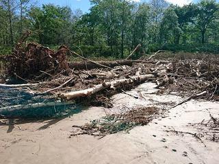 台風10号で土砂に埋もれた北海道有数のハスカップ農園を元の姿へ