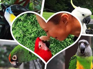 鳥と人が幸せに暮らせる社会の手助けとなる事業を始めたい!