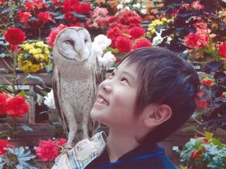 静岡県 富士花鳥園 南の鳥ふれあいエリア復活プロジェクト始動!