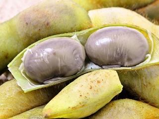 幻の丹波篠山の黒枝豆を全国に広め多くの方に食べてほしい!