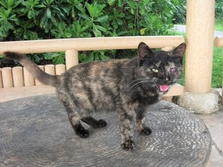 【第2弾】石垣島の捨てられた猫たちに、治療を受けさせたい。