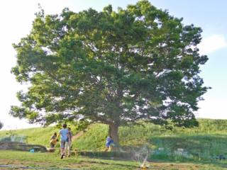こども達が豊かに育つ【つどいの木】をみんなの想いで残したい!