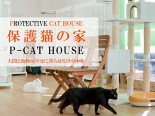 行き場を失った猫を守る保護猫の家「P-CAT HOUSE」を広めたい!