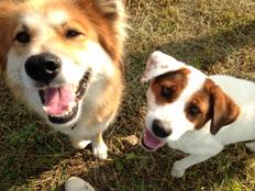 不登校の子どもに保護犬を通して他者との関わりを学ぶ講座を行う