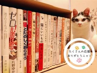 「かわいい!」から猫の問題を考える「ねこ本カフェ」を日立市へ