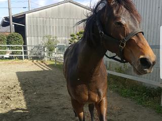 華やかな競馬の引退後…処分される多くの馬を1頭でも助けたい!