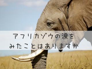 絵本「牙なしゾウのレマ」を全国へ!小学校読み聞かせキャラバン
