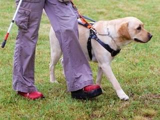 身体の不自由な方のパートナー「補助犬」が活躍できる社会へ!