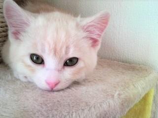 命の期限つき猫を救う!レスキュー×TNRで殺処分0へ確かな一歩を