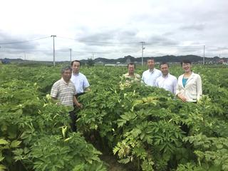 東松島市に元気を届ける「希望の明日葉」の栽培量を増やしたい!