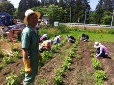 食で南三陸の再生を!食の通信誌発行、菊芋の製品化を行いたい!