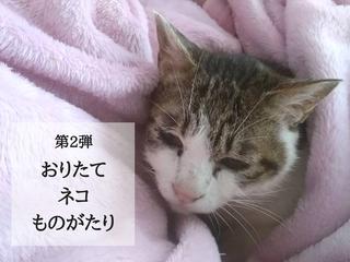宮城の保護猫80匹に快適な環境を!保護施設の洗い場を改修したい