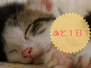 猫カフェを店舗改装し、より多くの保護猫を新しい家族のもとへ。
