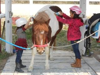 三重県にある「子ども専門」の乗馬クラブに、新馬を購入したい!