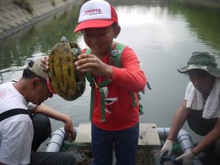 佐鳴湖のアカミミガメをとって食べる!外来種を駆除→有効活用!
