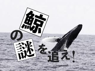 突如、八丈島に現れたザトウクジラ。変化する生態系の謎に迫る!