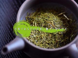 旨み・甘みの境地!白葉茶「つきしろ」が煎茶文化を変える!