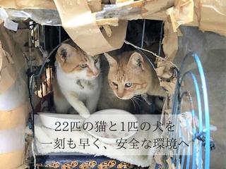 埼玉県三芳で飼育放棄された犬猫たちをシェルターへ避難させたい
