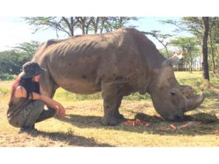 ケニアから配信!絶滅迫る動物たちの為のチャンネルを作りたい!