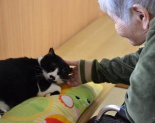 里親探しが困難な猫達と高齢者を繋ぐ、自宅開放型猫カフェ実現へ
