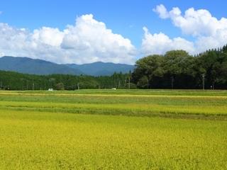 岐阜で食育イベントを開催!自然米を炊いて、握って、味わおう!