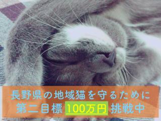 """長野で地域猫の室内飼いを普及する""""保護猫カフェ""""をOPENしたい"""