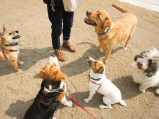 犬と人が「学び・遊び・出会える場」を被災地・石巻に創りたい!