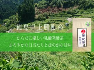 1200年以上続く上勝町の伝統「長期発酵・阿波晩茶」を限定販売!