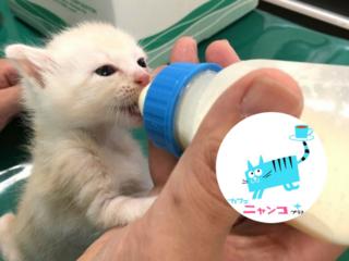 動物病院×猫カフェ。猫のいのちを救い、家族につなぐ挑戦を!
