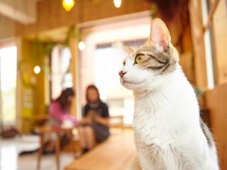 足立区初!子ども達と運営する譲渡型保護猫カフェを作りたい。