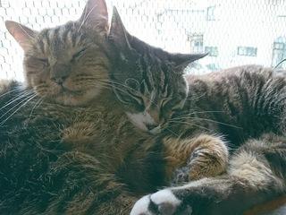 猫に安全な家を!庄内地方唯一の保護猫シェルターを改修したい!