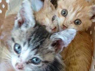 数が増え飼育しきれなくなった59匹の猫を救ってあげたい。