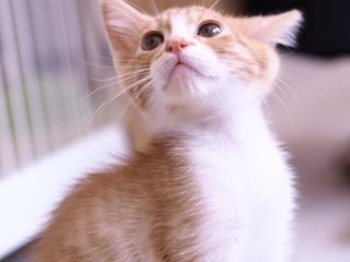 日本の殺処分を減らしたい!福井市に譲渡型保護猫カフェOPEN