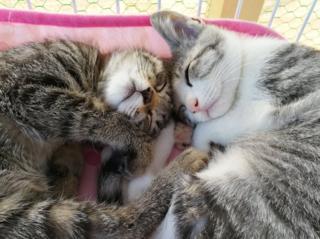 保護猫の『里親募集スペース』再スタートを応援してください!