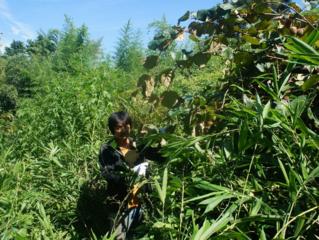 竹と笹を駆除して キュウイを育てたい ユンボ が必要です