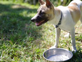 行き場をなくした犬・猫を守るために。保護施設に水道設備を!