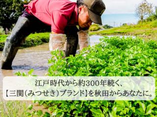 秋田の若手農家の起業を応援し、あなたも農園オーナーに!