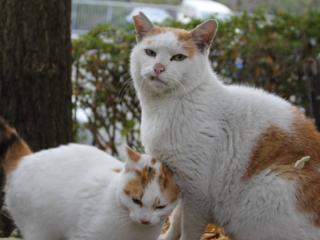 神戸市でのら猫専門動物病院を開院し、生体モニターの導入を!