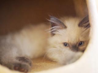 命のバトンを繋げたい!保護猫ちゃん達にずっとのお家を!