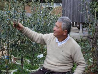 耕作放棄地でオリーブ無農薬栽培!新国産オリーブ産業を興したい