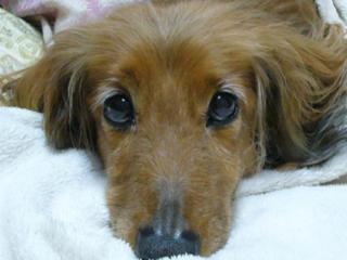 動物飼育の正しい知識を広めて、人と動物の幸せを考えたい!